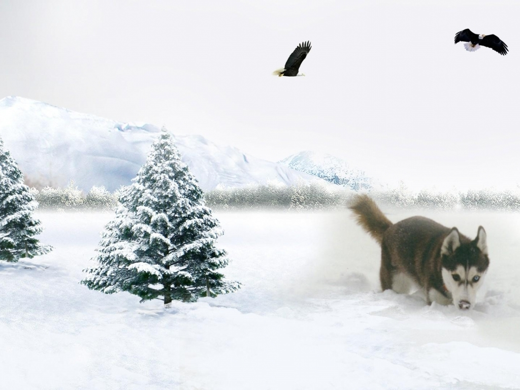 Download Dog in the snow wallpaper in Animals wallpapers with all 1024x768