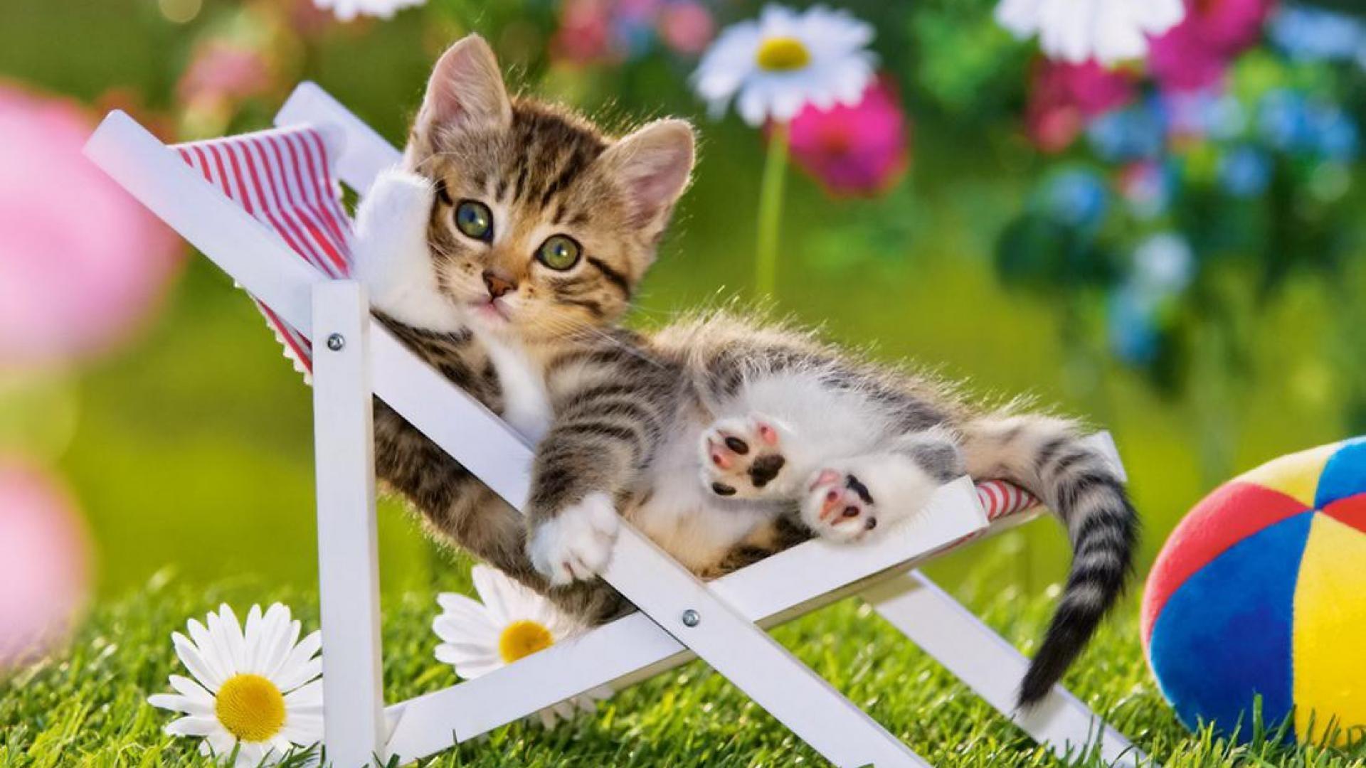 35+] Summer Cat Wallpaper Images on WallpaperSafari