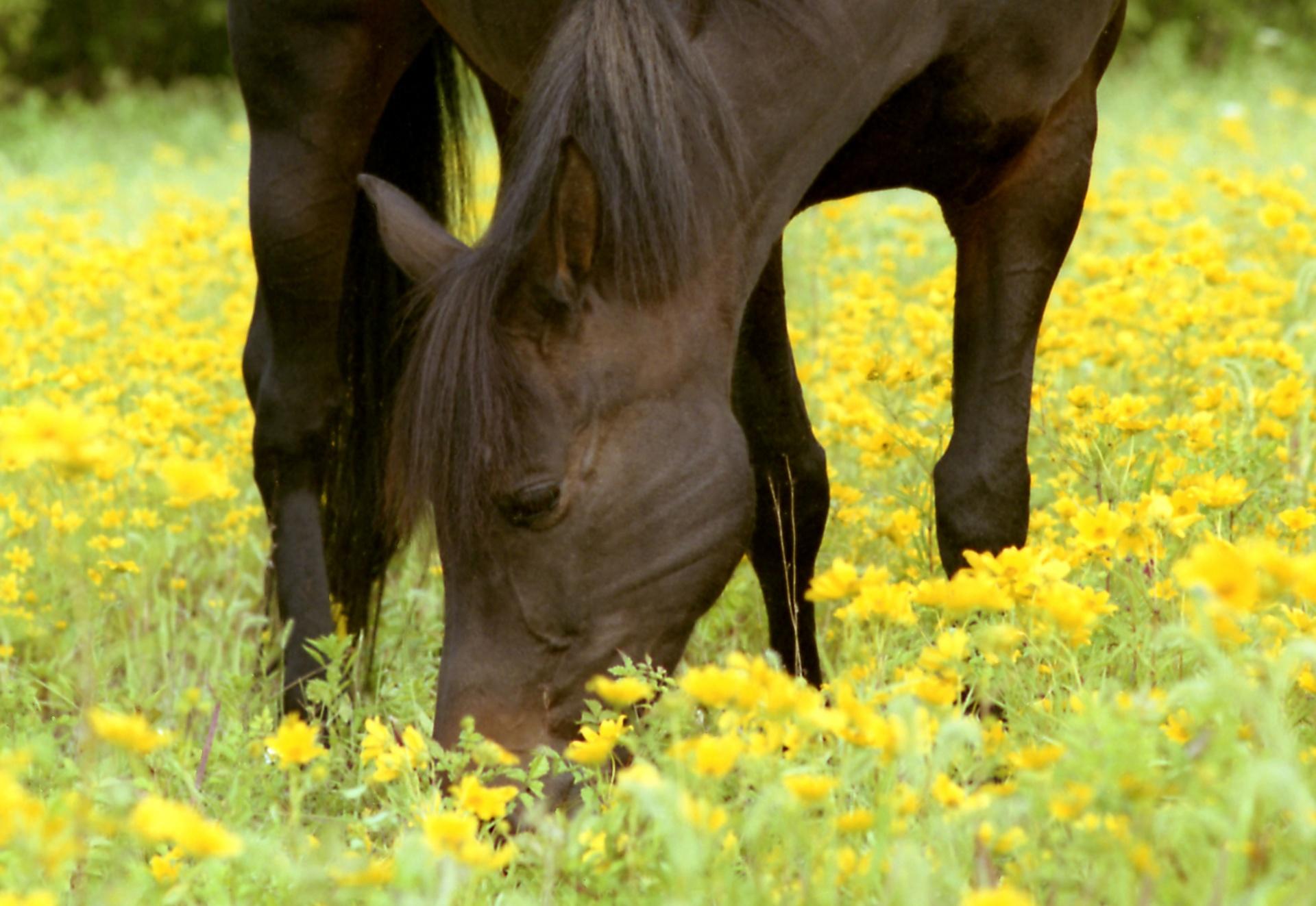 Лошадка Для Детей картинки, бесплатные обои и фото 38