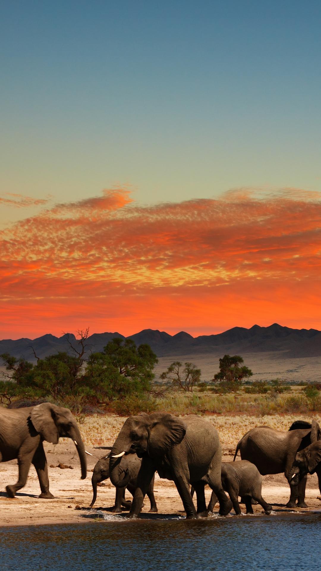 Elephants in African savanna 4K Ultra HD wallpaper 4k WallpaperNet 1080x1920