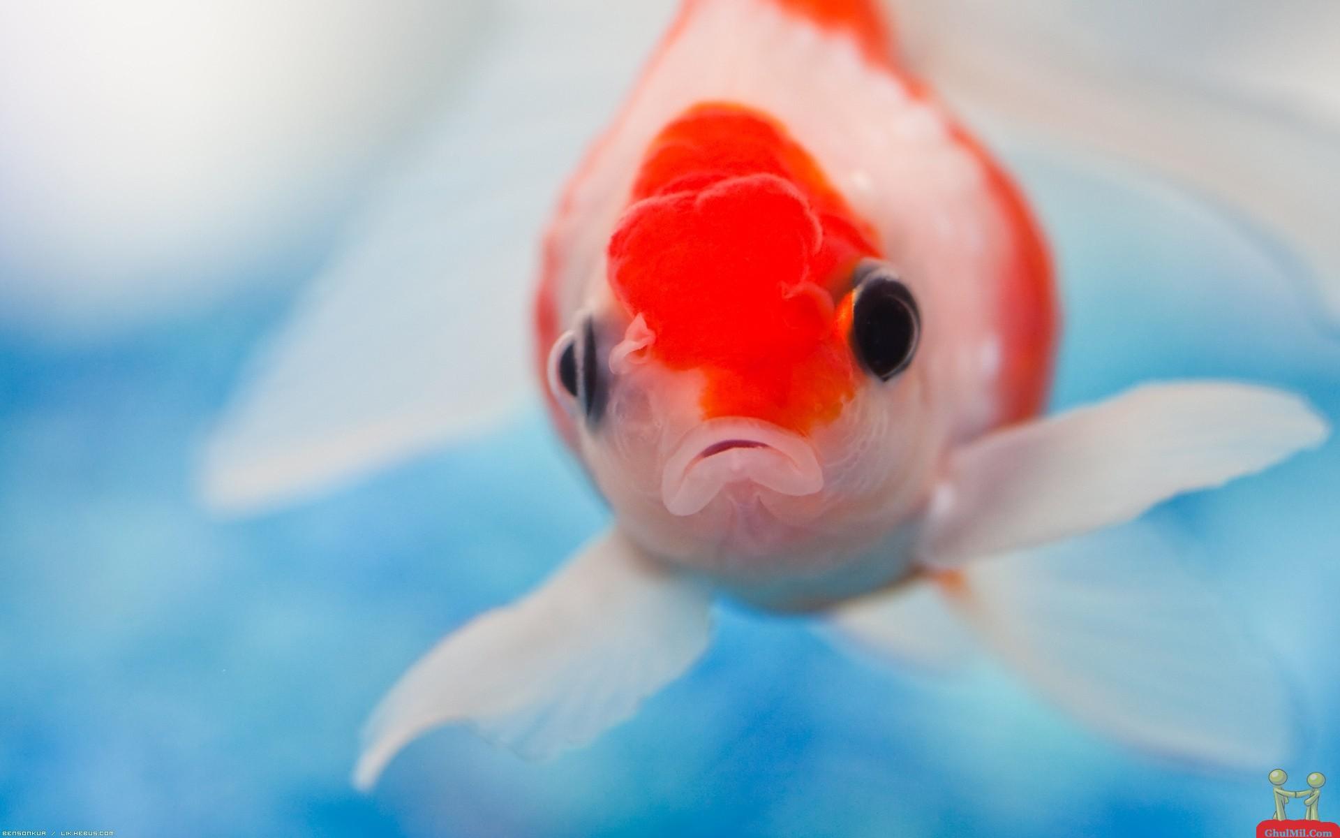 cute fish wallpaper