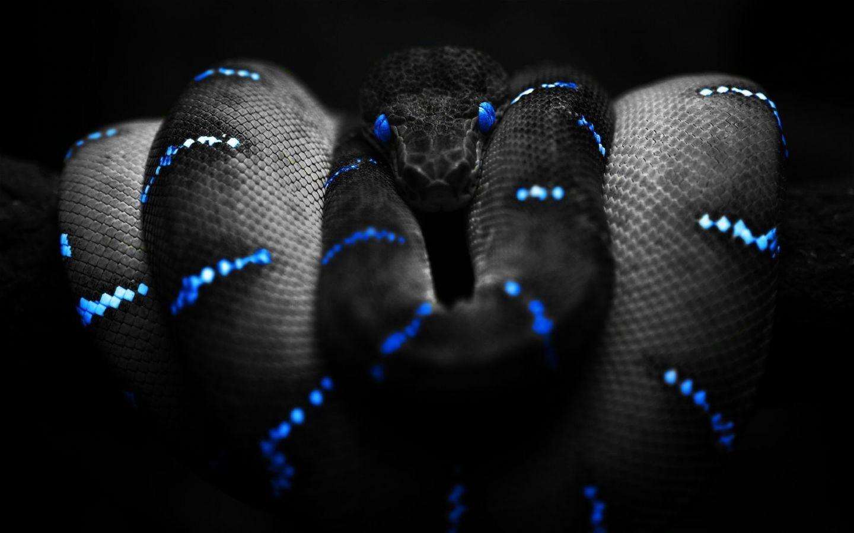 Beautiful HD Wallpapers Black HD Wallpapers 1440x900