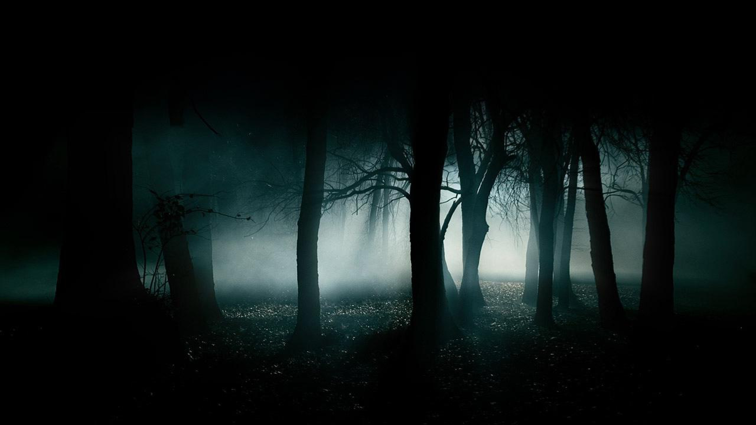 Dark Forest Background Tumblr Images amp Pictures   Becuo 2560x1440