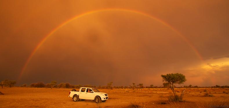 Pin Rainbow Lion Kalahari Desert Wallpapers 790x374