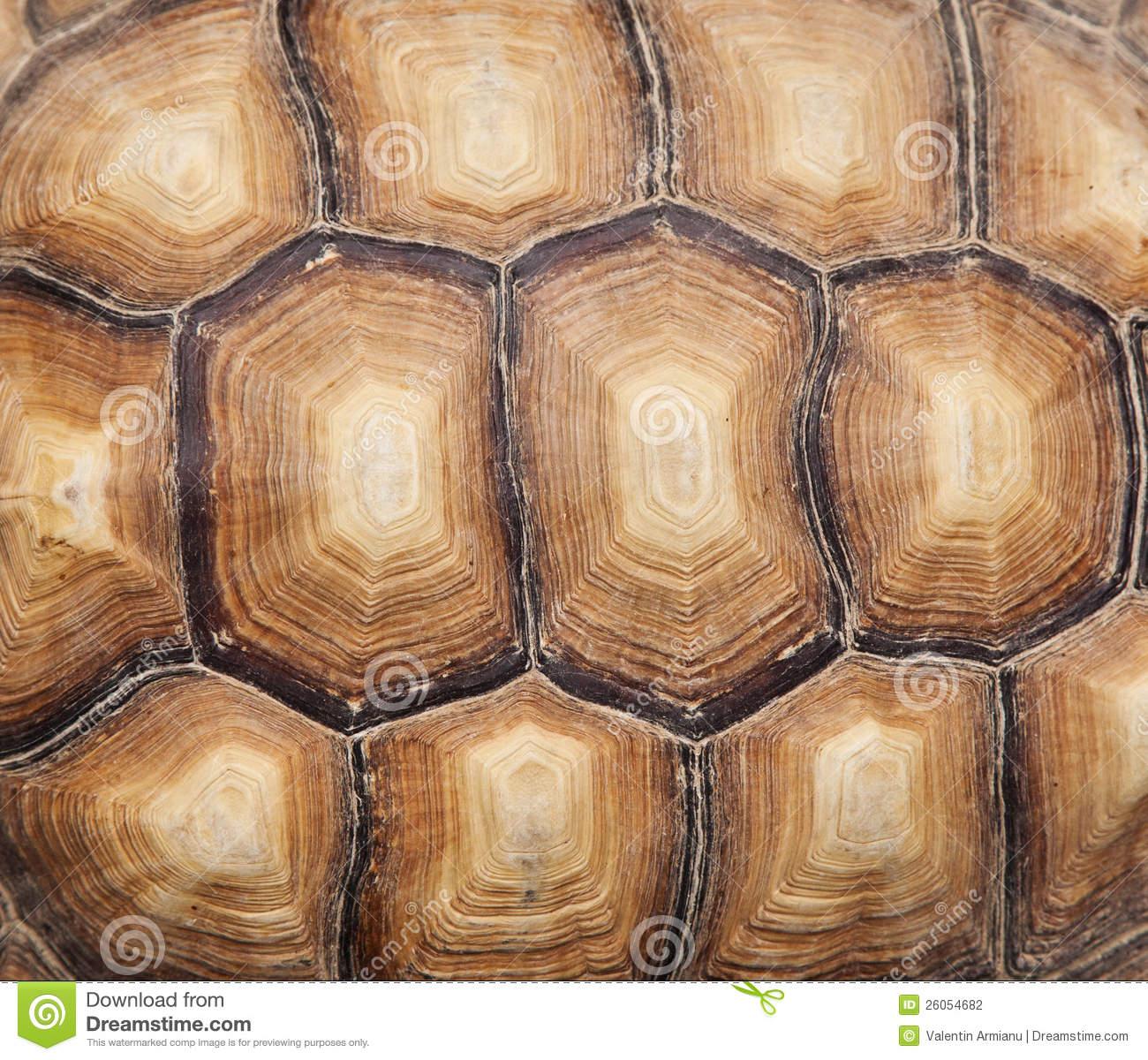 Tortoise Shell Wallpaper