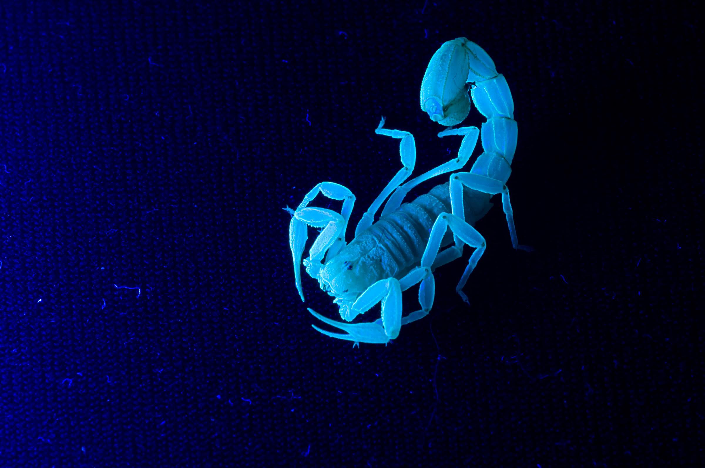Scorpion Abstract Wallpapers Photo   Bhstormcom 2400x1594