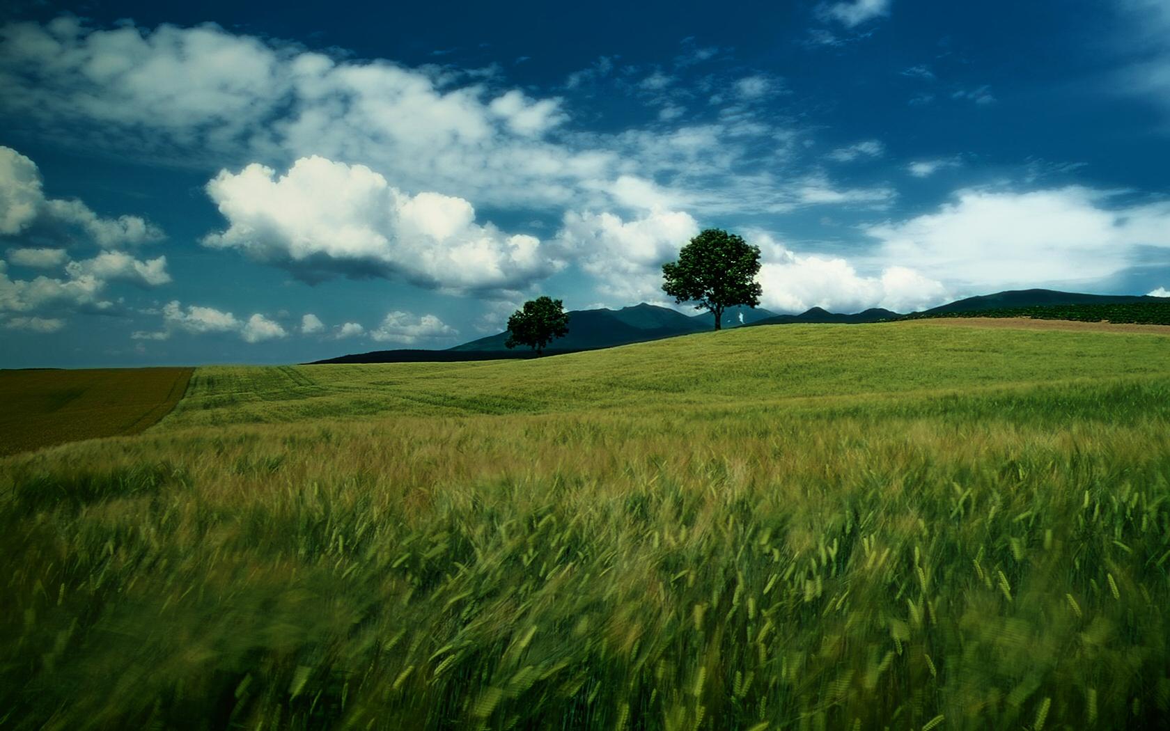 Fields Wallpaper - WallpaperSafari