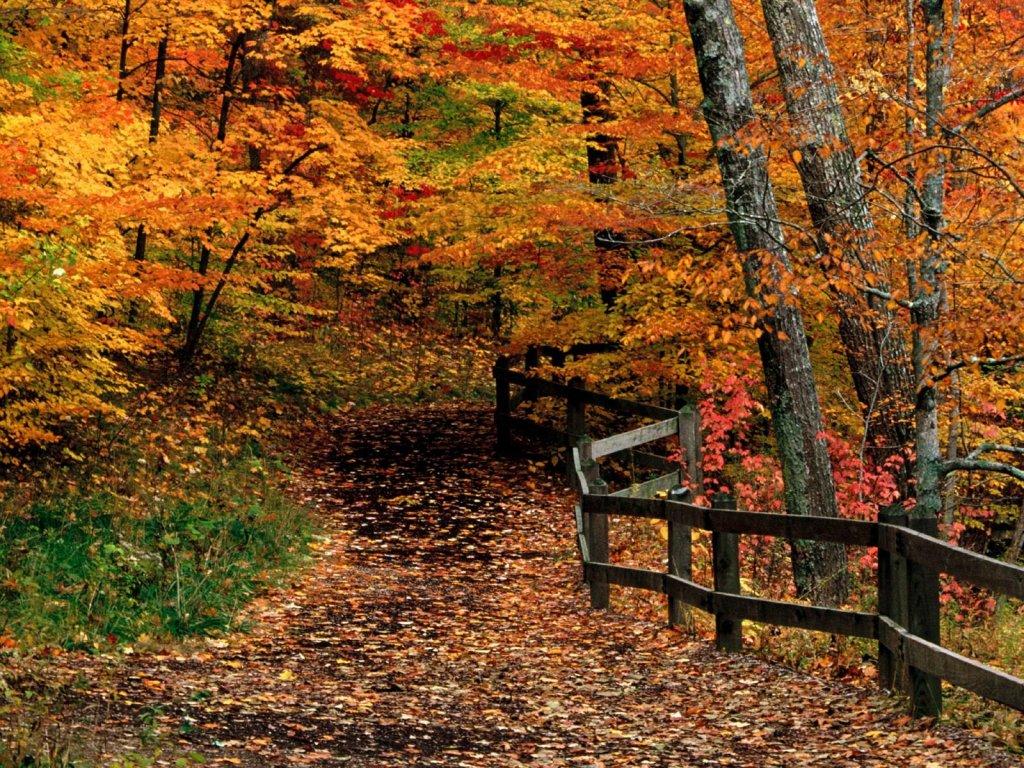 Fall Scene   Wallpapers 1024x768