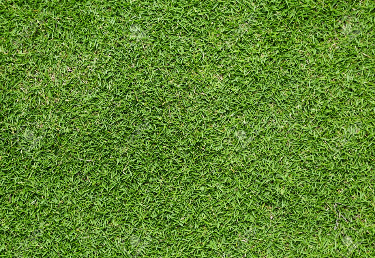Green Short Thick Bermuda Grass Lawn Background Stock Photo 1300x894