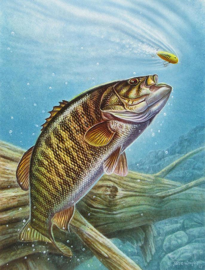 Bass Fishing Painting Bass paintings   smallmouth 686x900