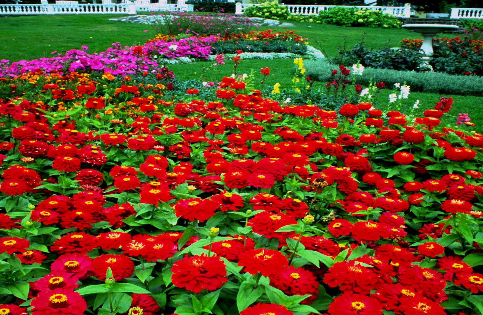 Flower Garden Pictures Free Download Free Spring Wonder Fresh