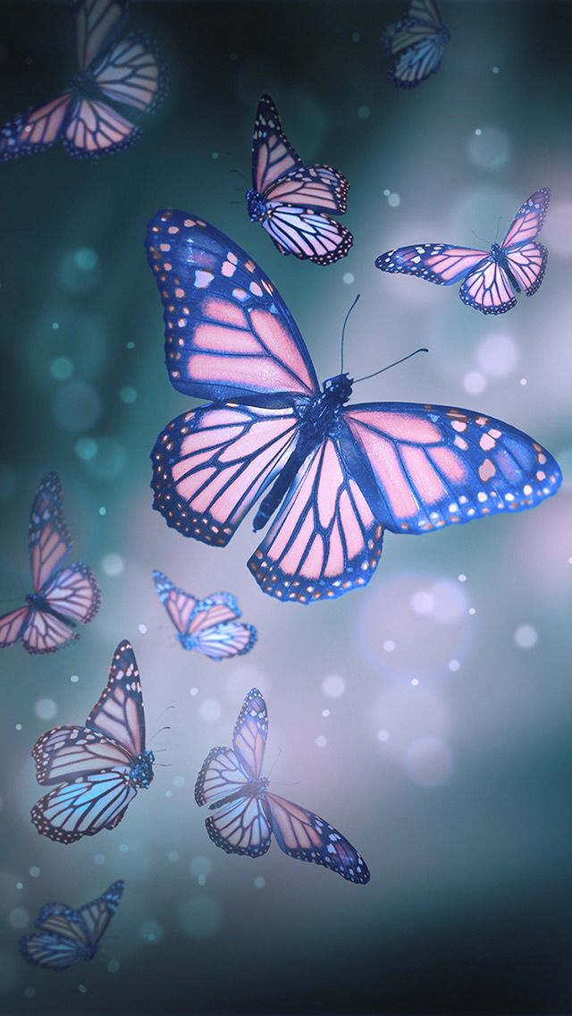 Butterfly Wallpaper EVERYTHING Just me in 2019 640x1136