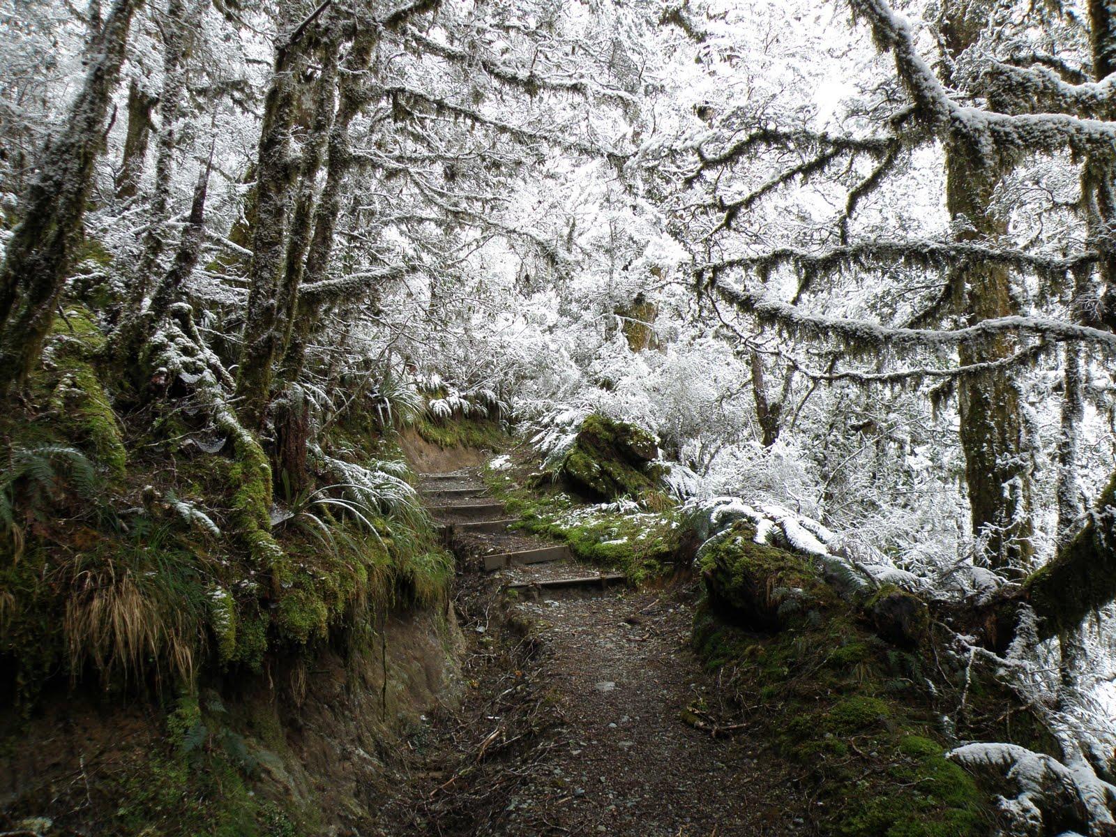 Trail Running Wallpaper From richard trail running in 1600x1200