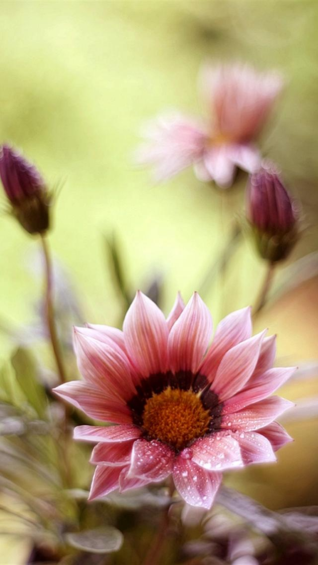 iphone 5 wallpapers hd cute beautiful flowers iphone 5 wallpaper 640x1136