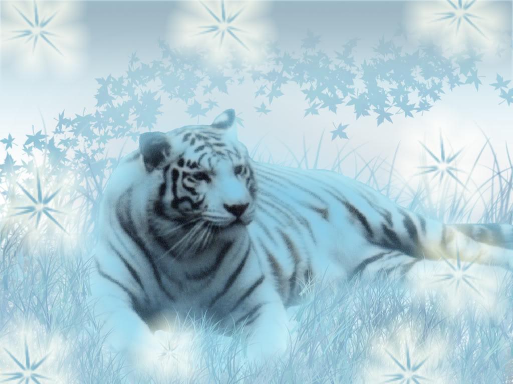 Tiger Background   Tiger Wallpaper 1024x768