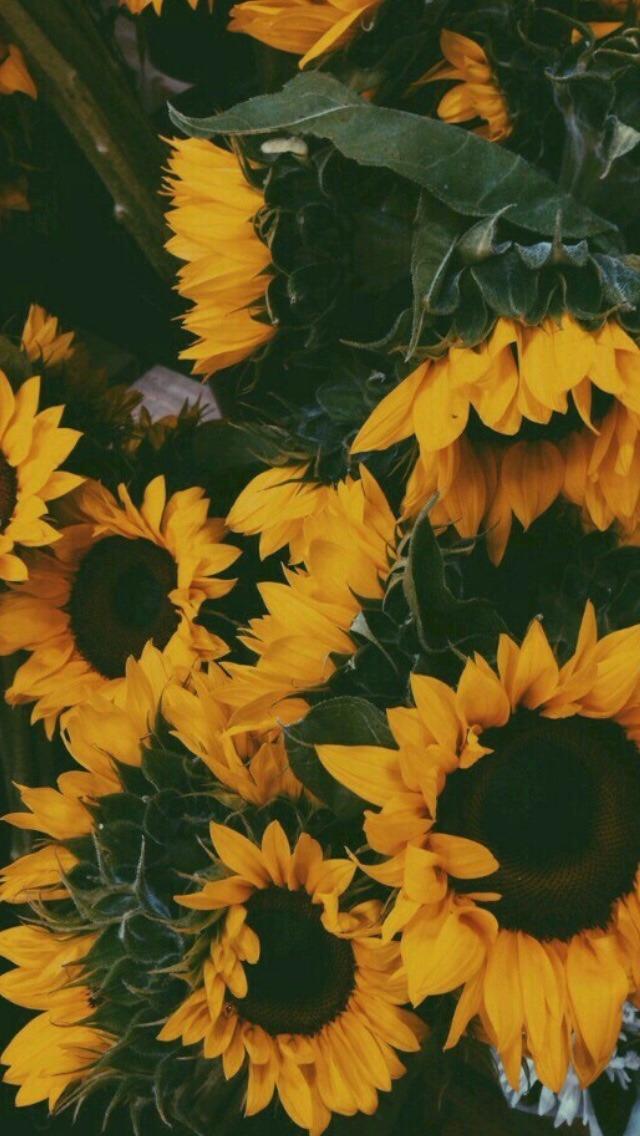 Ari Rachel afbeeldingen aesthetic flowers HD achtergrond 640x1136
