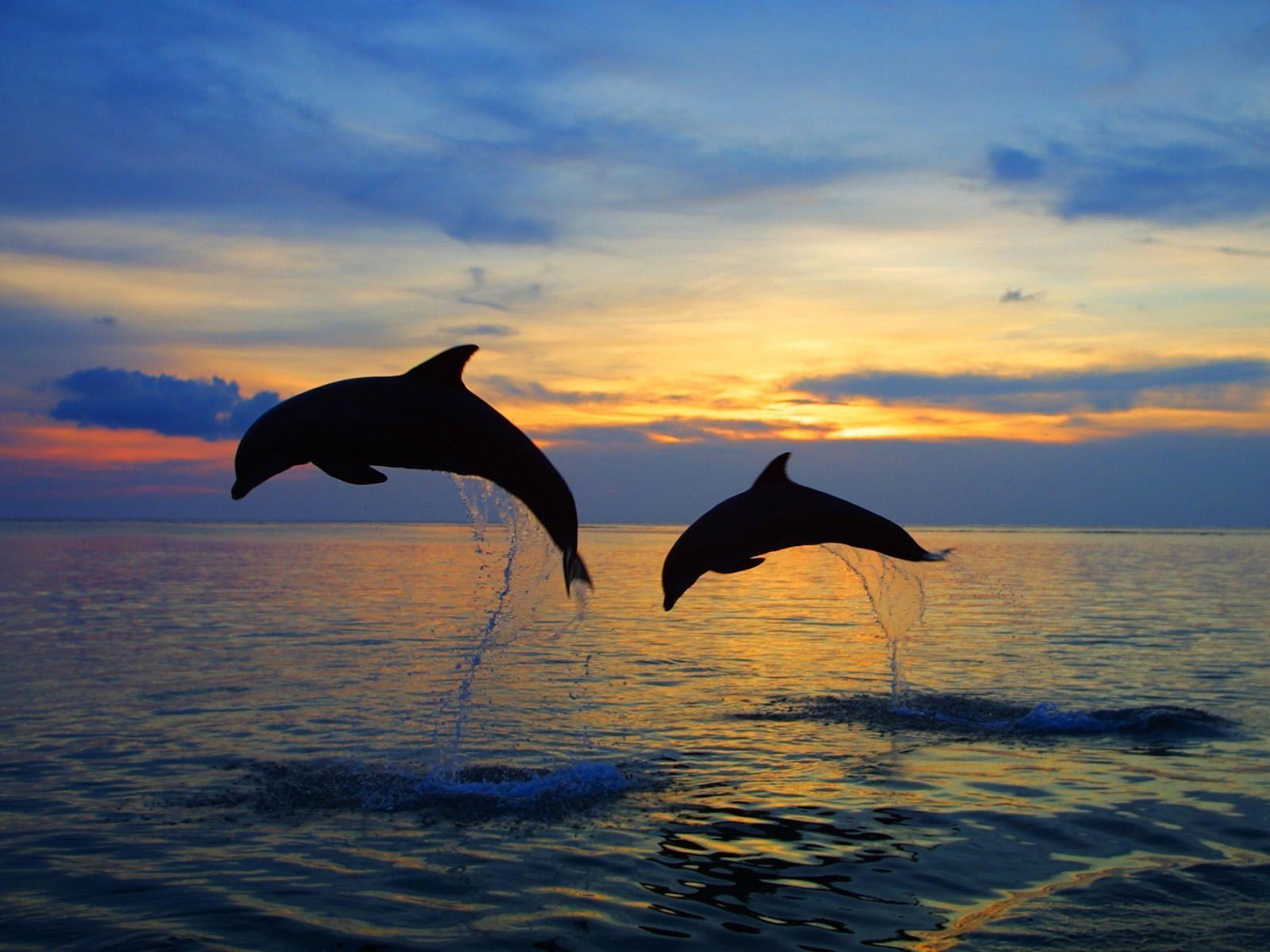 Bottlenose dolphins HD Wallpapers 7wallpapersnet 1600x1200