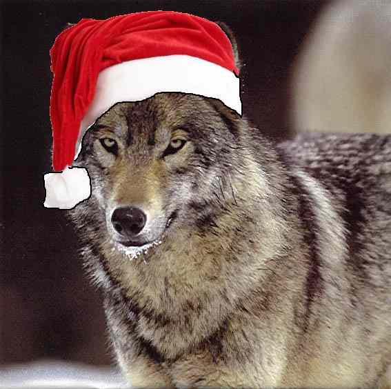 Wolf Christmas Wallpaper - WallpaperSafari