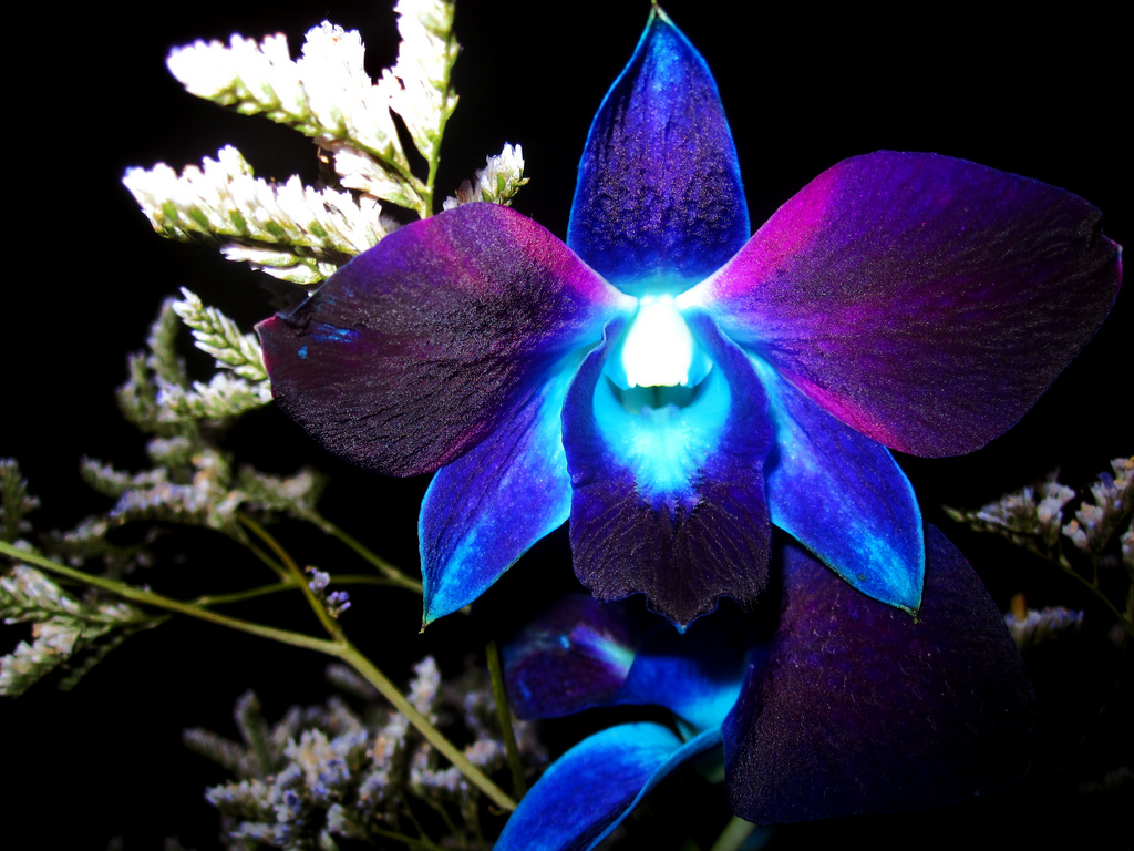 Blue Exotic Flowers Exotic Blue Orchid Flower hd 1024x768