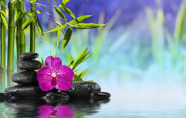 Wallpaper spa zen stones bamboo flower orchid water reflection 596x380