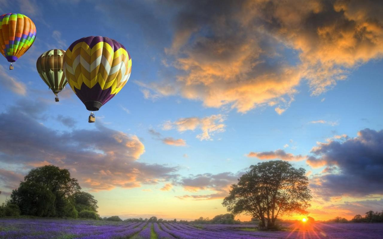 Colorful hot air balloons over lavender fields HQ WALLPAPER   131443 1280x800