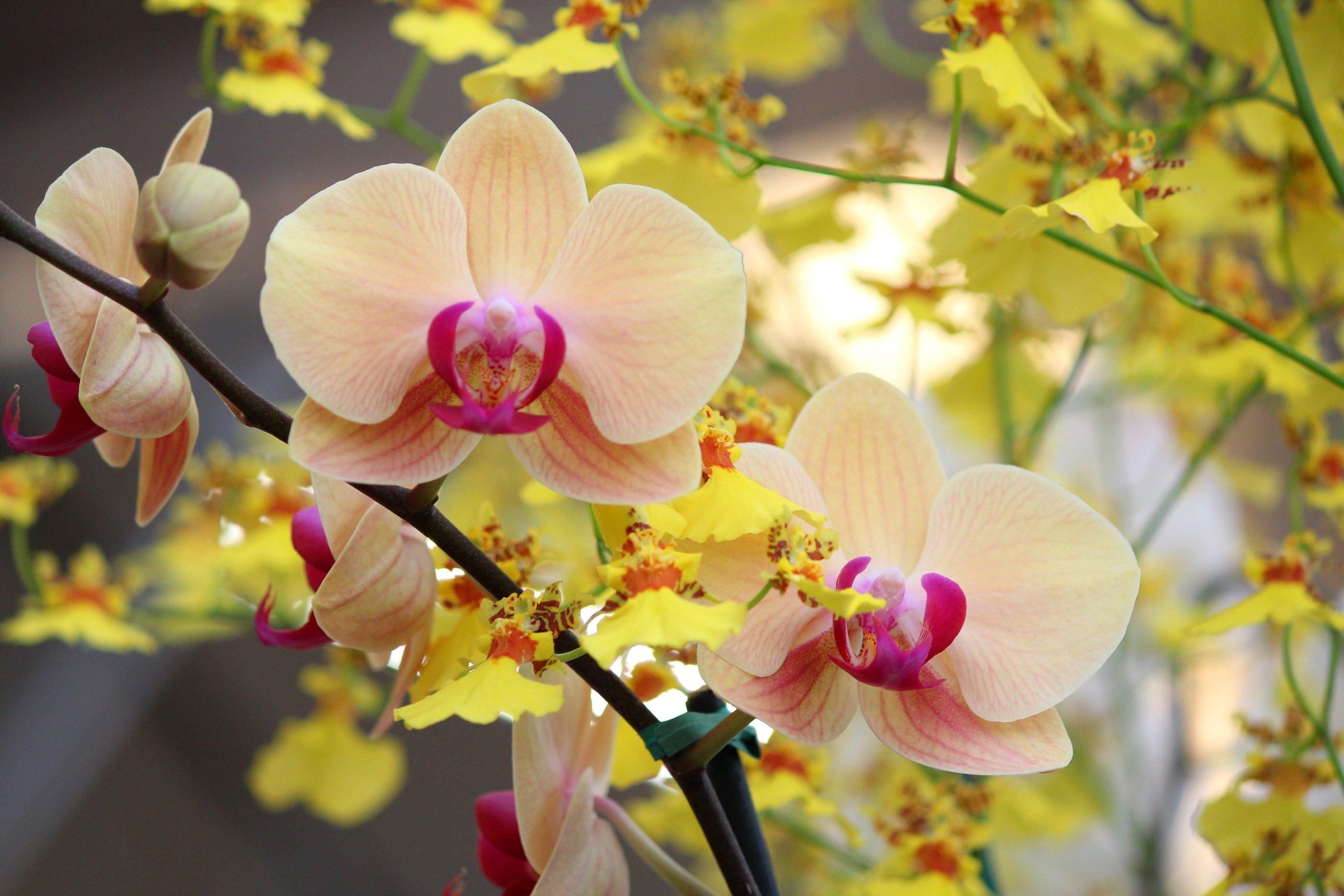 Feng Shui Flowers loopelecom 2800x1867
