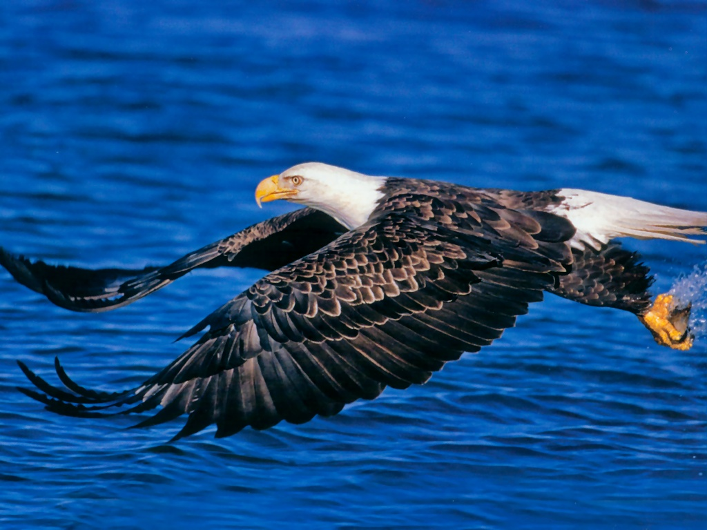 1024x768px bald eagle wallpaper border - wallpapersafari