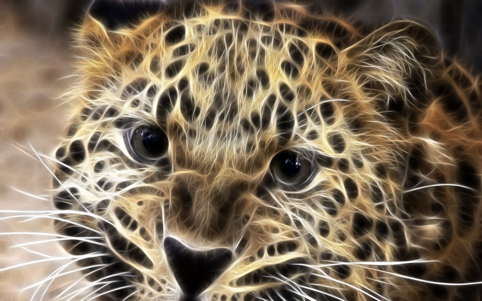 Leopard wallpapers and images   wallpapers pictures photos 1680x1050