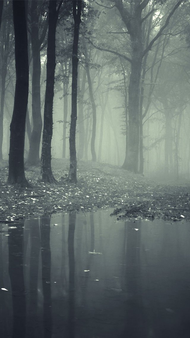 dark scary forest wallpaper wallpapersafari