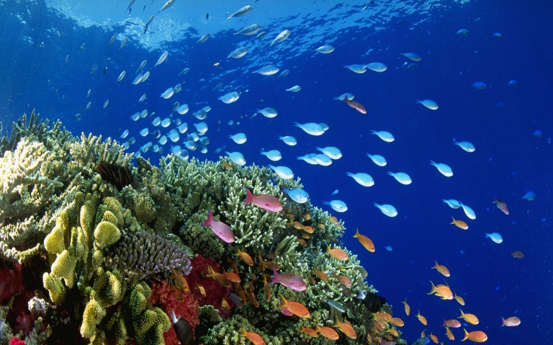 underwater coral reef 2560x2048 wallpaper Art HD Wallpaper download 1920x1200