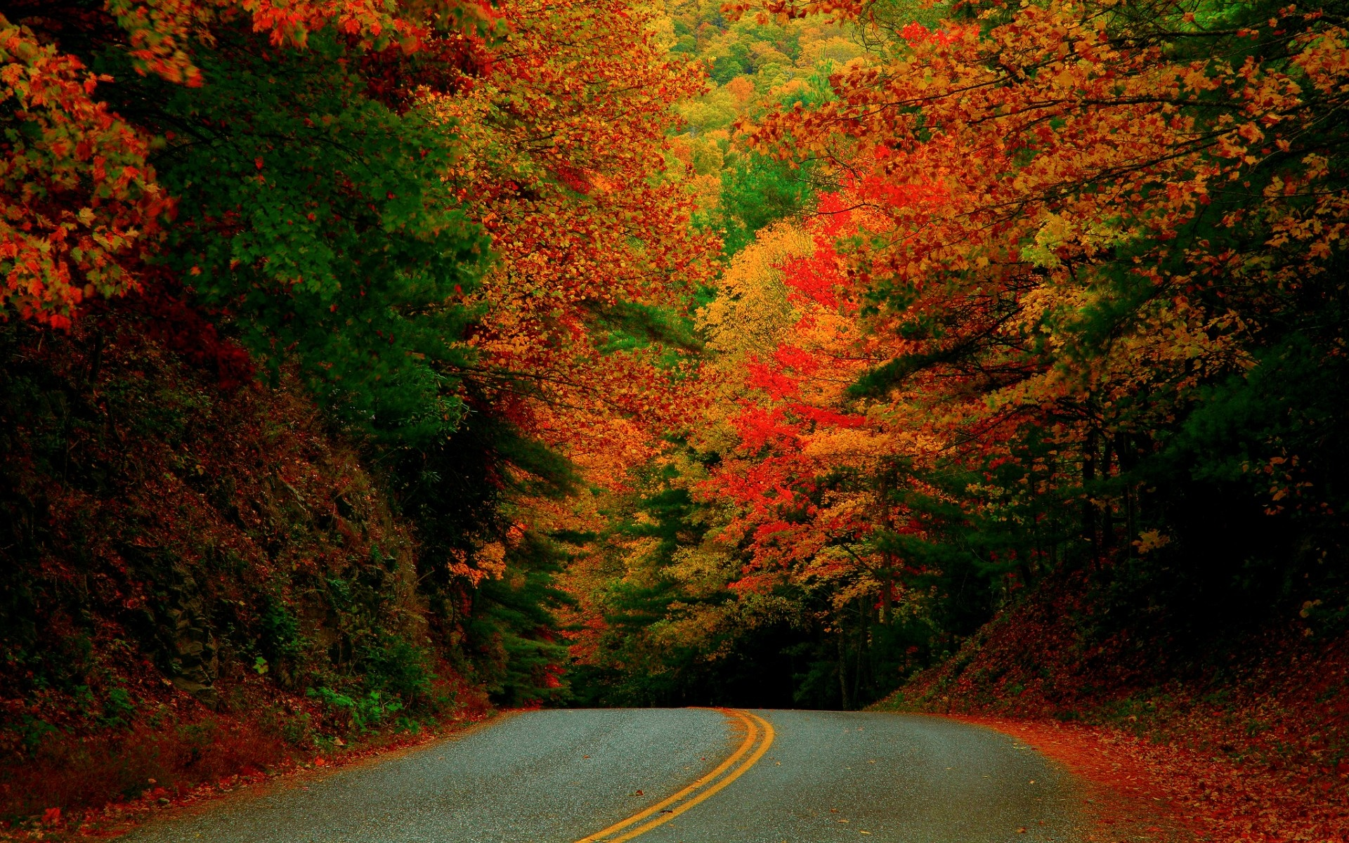 wallpaper north carolina fall road forest usa leaf desktop