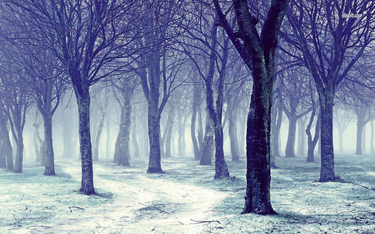winter forest wallpaper wallpapersafari