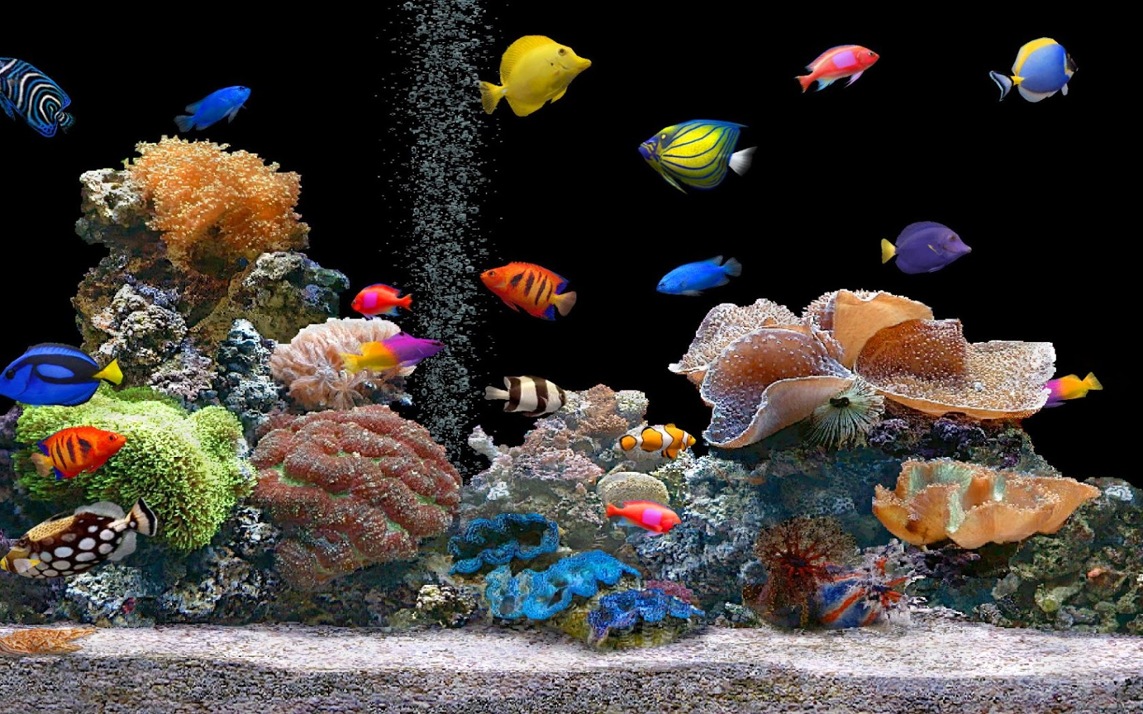 hd fish live wallpaper desktop hd fish moving backgrounds desktop hd 1600x1000
