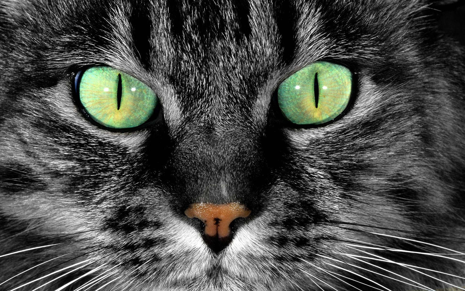 Cats With Green Eyes Wallpapers amp Beautiful HD Pictures 1920x1200