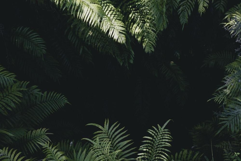 900 Jungle Background Images Download HD Backgrounds on Unsplash 1000x667
