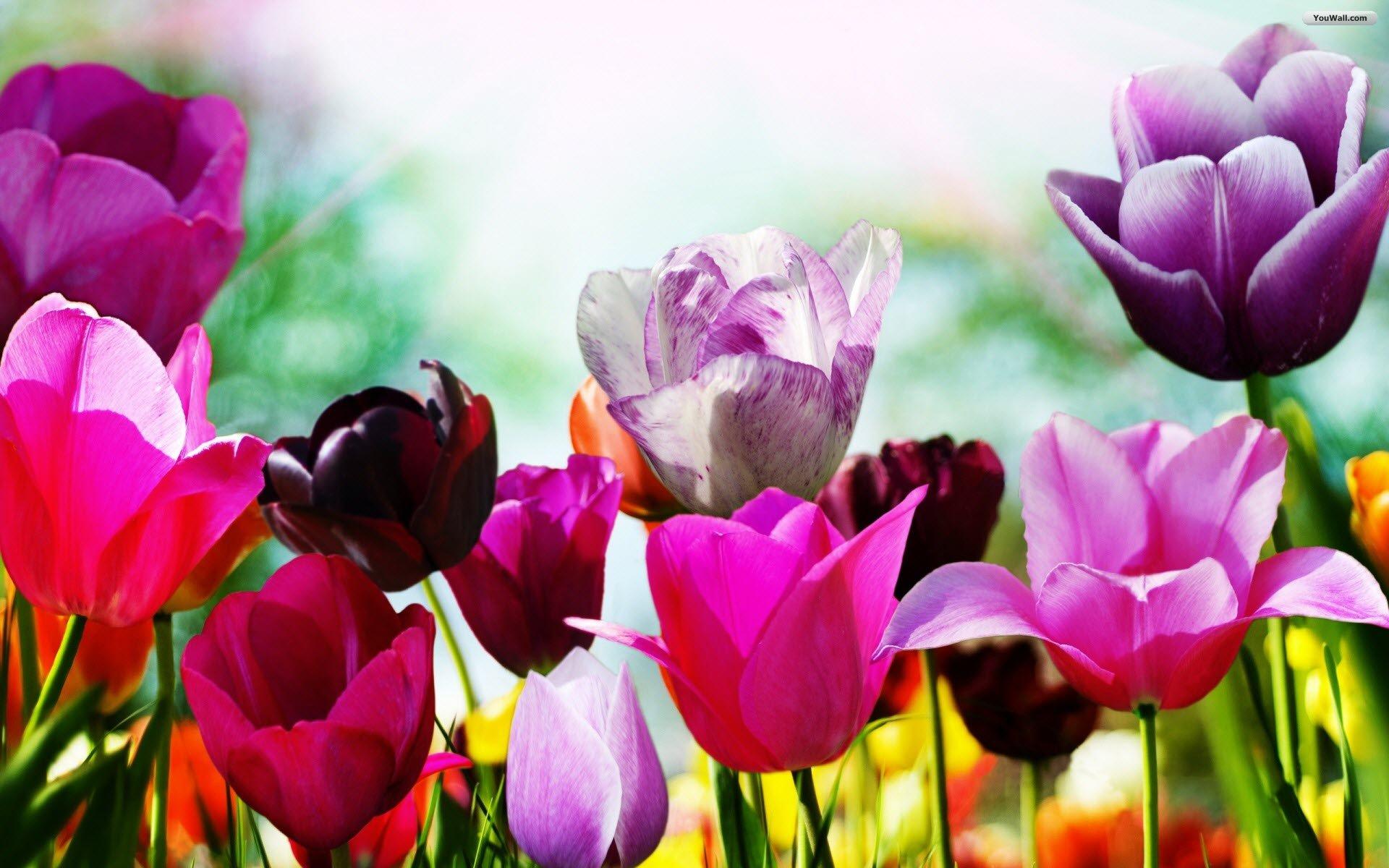 Spring Wallpaper   wallpaperwallpapersfree wallpaperphotodesktop 1920x1200