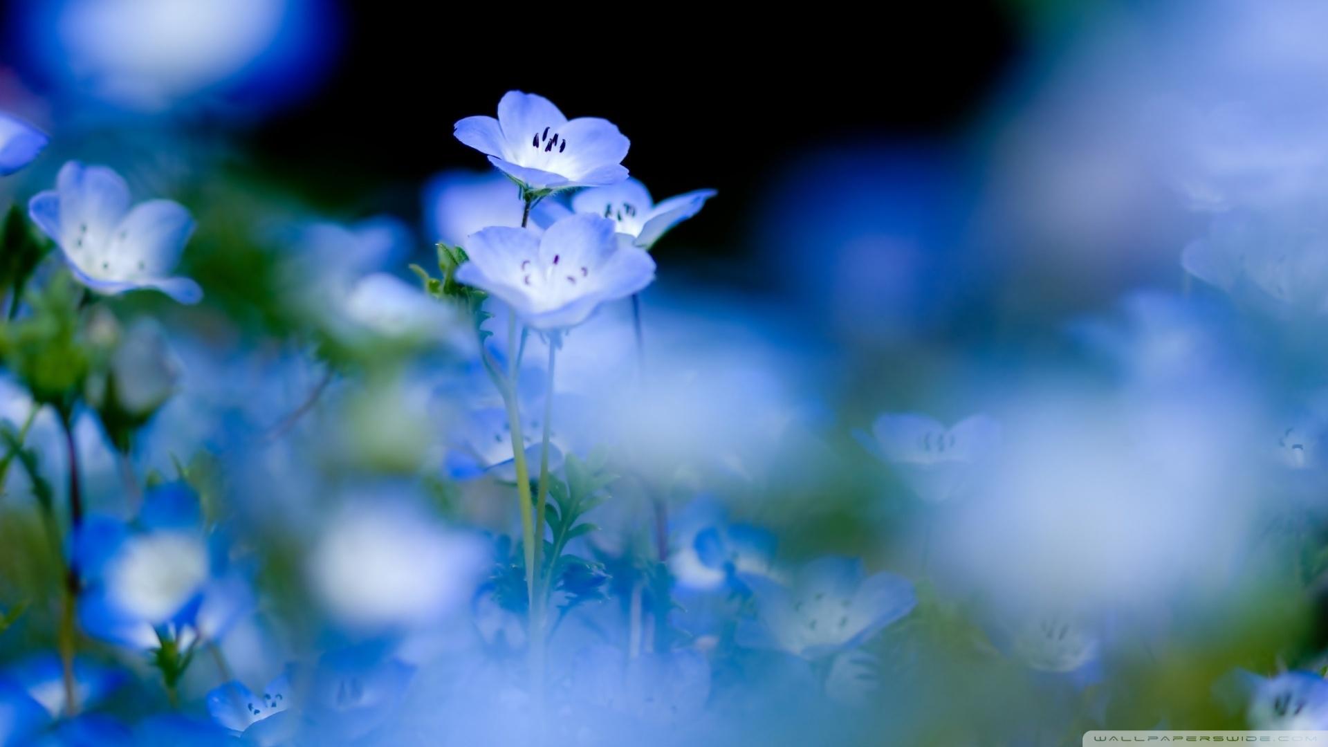 Blue Flowers Macro 2 Wallpaper 1920x1080 Blue Flowers Macro 2 1920x1080