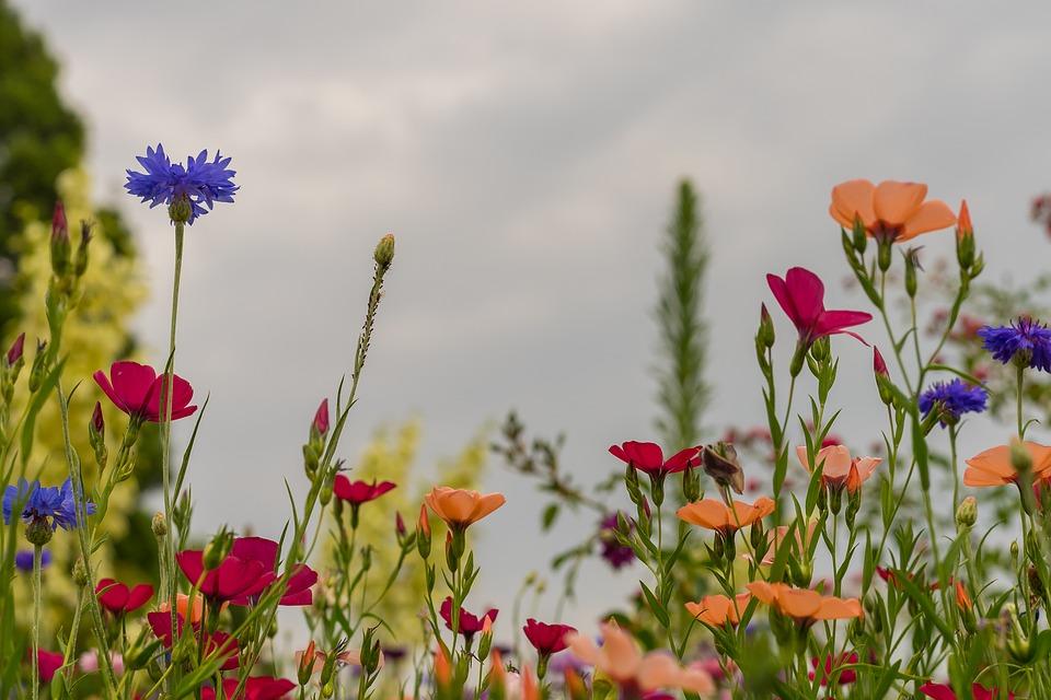 photo Flowers Background Summer Meadow Desktop Background 960x640