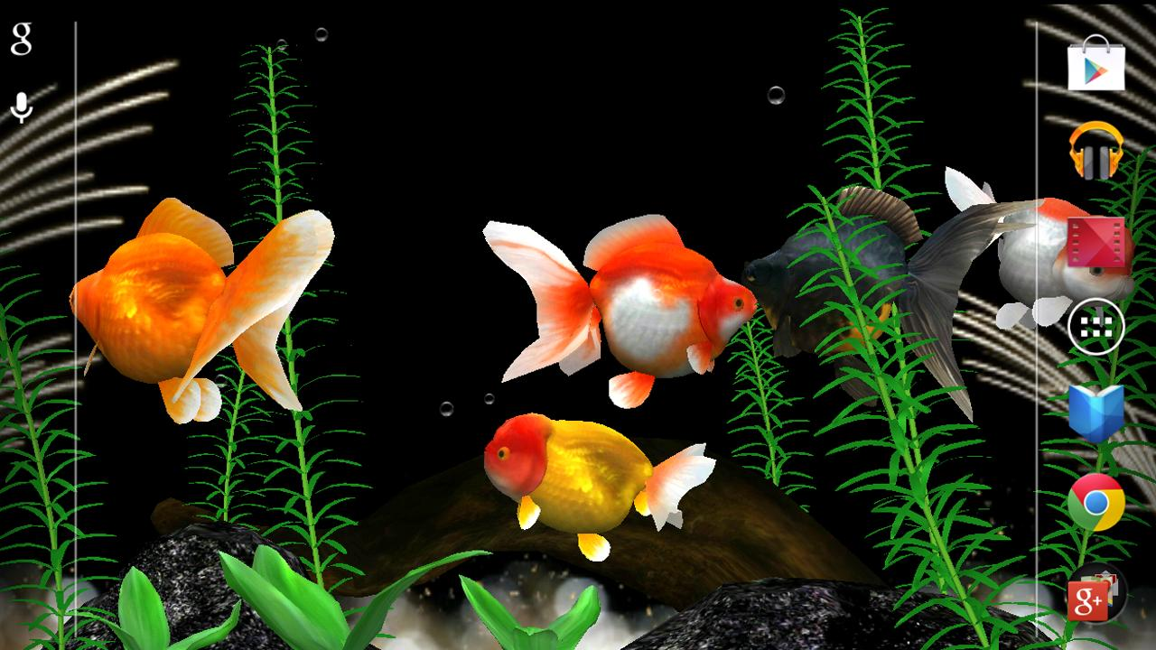 Gold Fish 3D Live Wallpaper   Android Apps on Google Play 1280x720