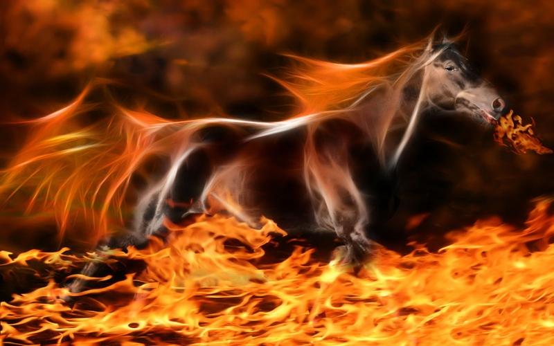 fire fractalius horses 1680x1050 wallpaper Animals Horses HD 800x500