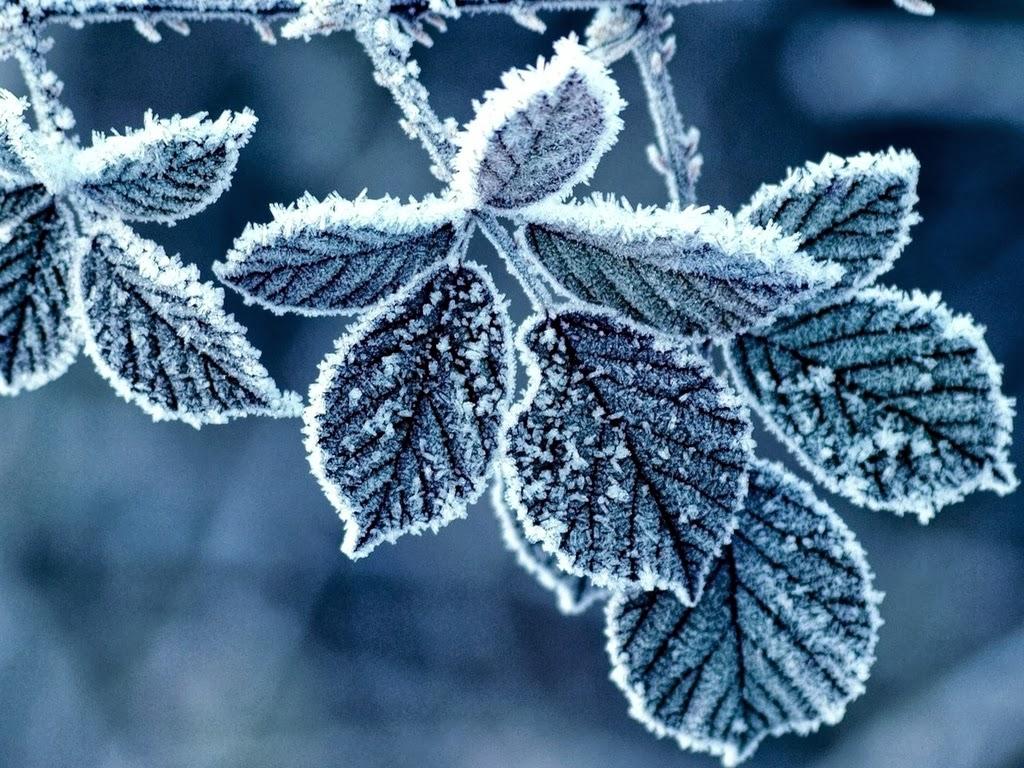 Winter Leaf Wallapaper 7 inch 1024x768