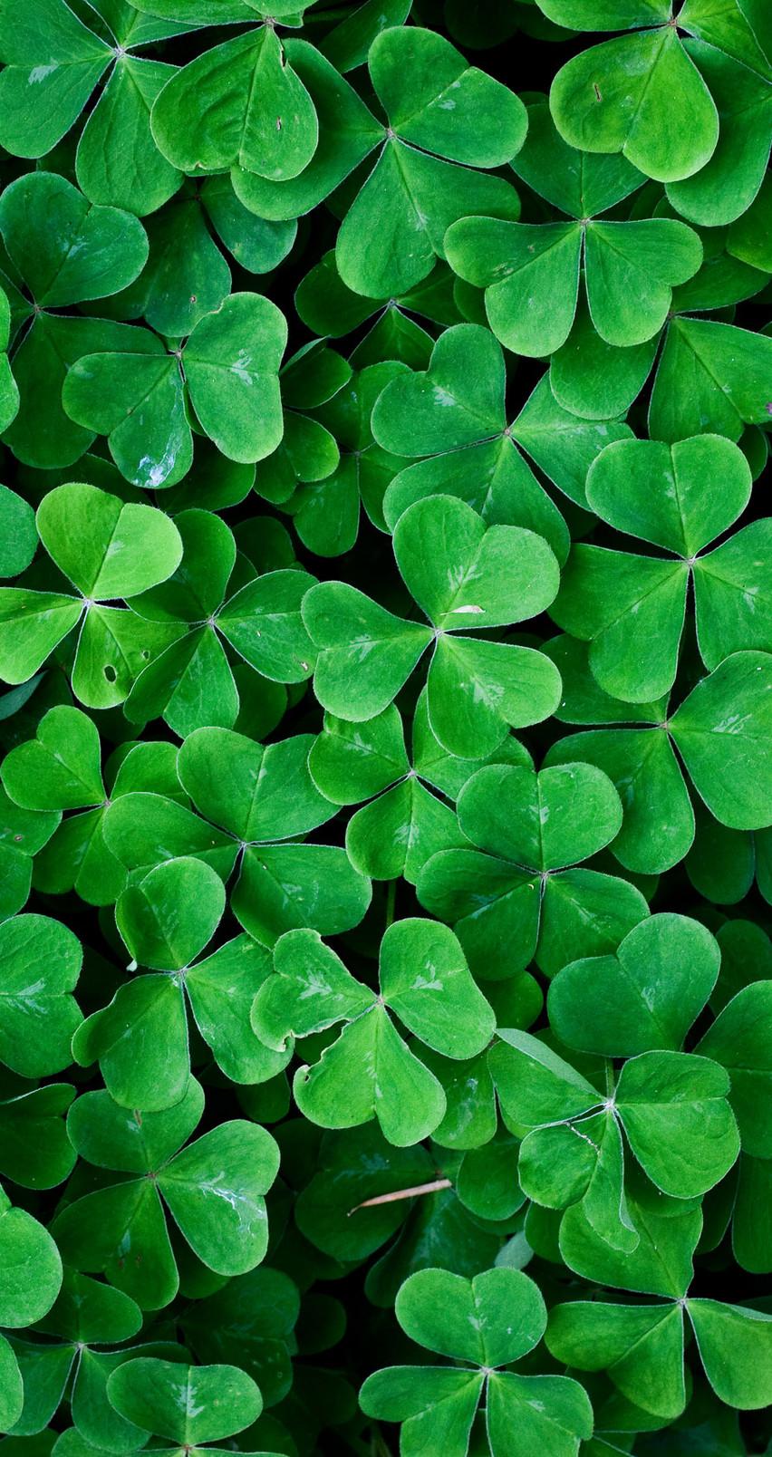 download Green leaf clover wall HD nature wallpaper [852x1608 852x1608