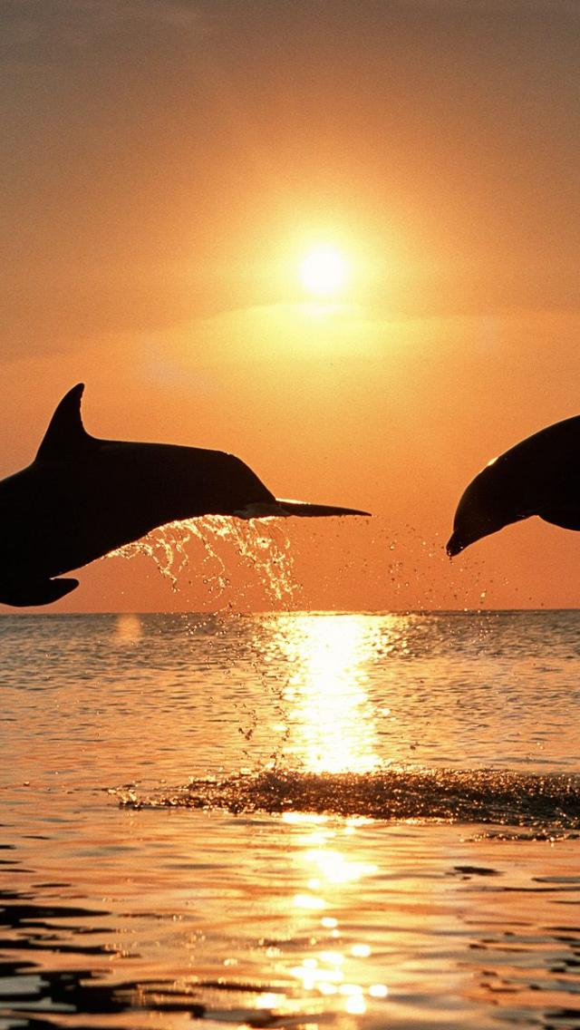 live wallpapernetiphone5itemdesktop dolphin wallpapers hd dolphins 640x1136