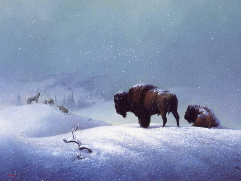 buffalo wallpapers Desktop Backgrounds for HD Wallpaper wall 1024x768
