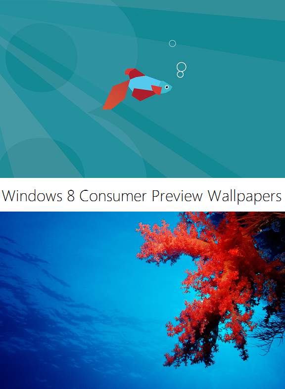 Windows 8 Consumer Preview Wallpapers by Misaki2009 576x787