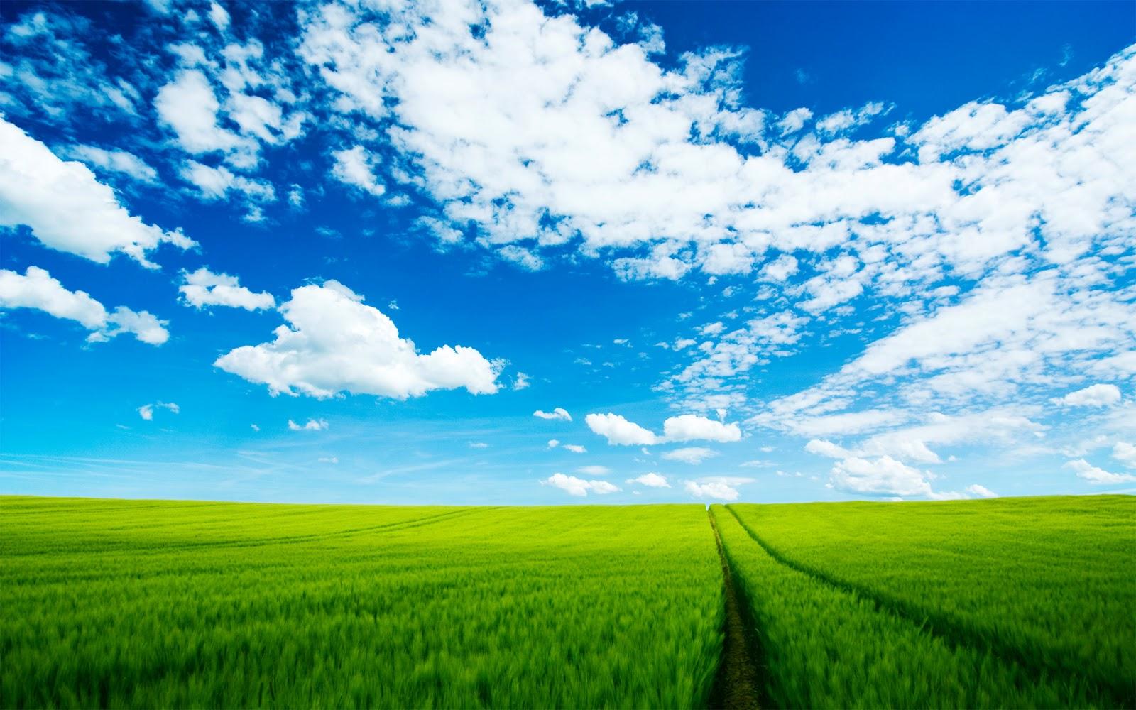 Beautiful Summer Scenery Wallpaper Scenery Backgrounds 1600x1000