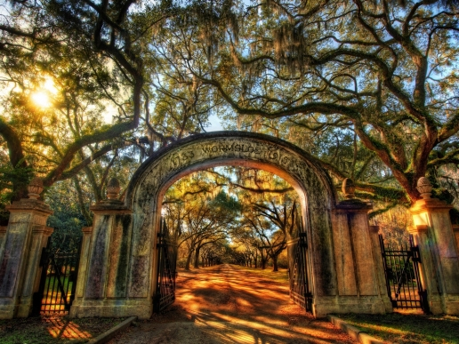 Wormsloe Savannah Georgia iPad HD Wallpaper 516x387