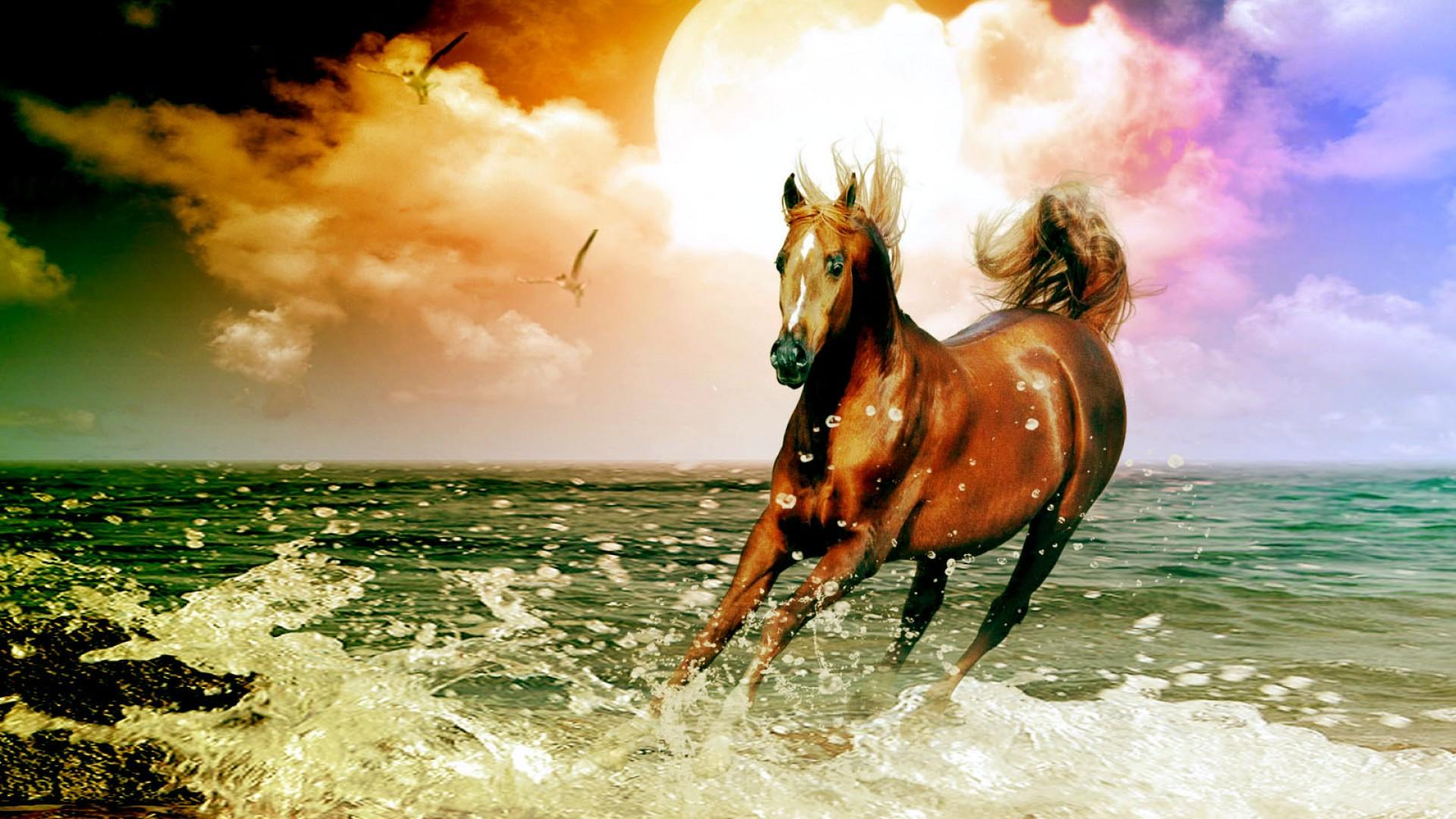 Arabian Horse Beach Desktop Wallpaper in high resolution for 1920x1080