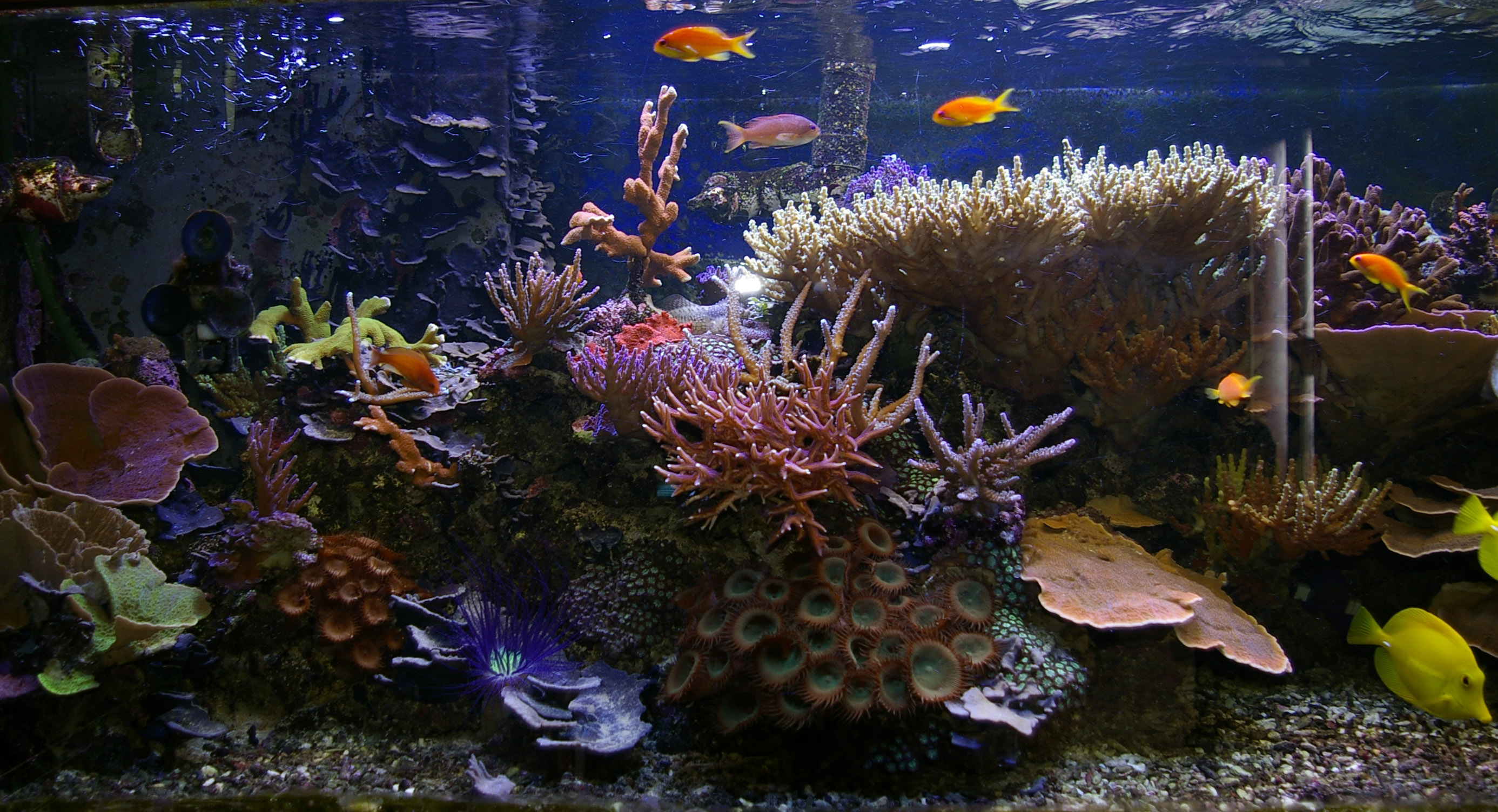 tropical saltwater aquarium 2773x1504