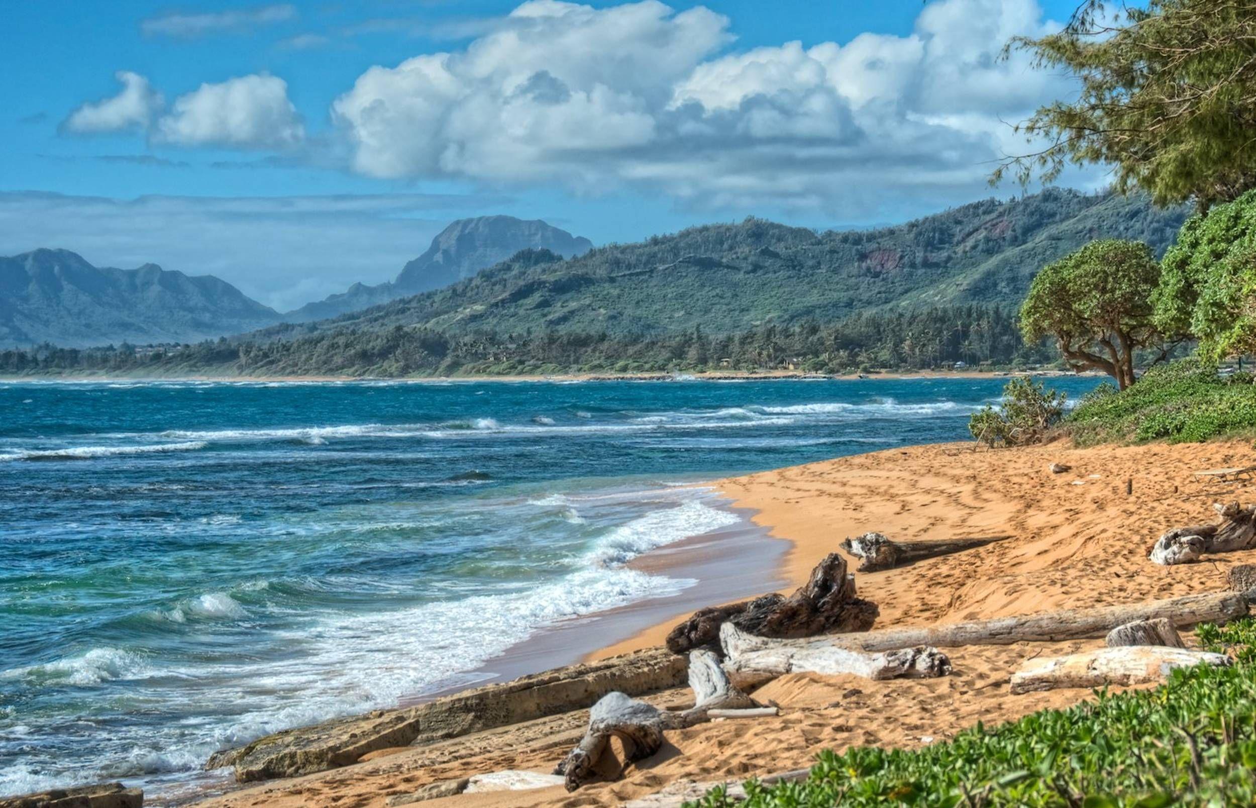 Driftwood On A Beautiful Yellow S Beach On Kauai Hawaii Desktop 2500x1608